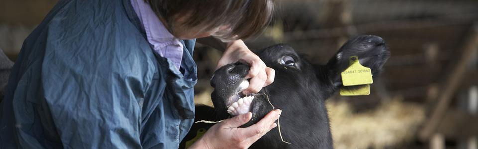 Recouvrement impayés professions libérales et vétérinaires